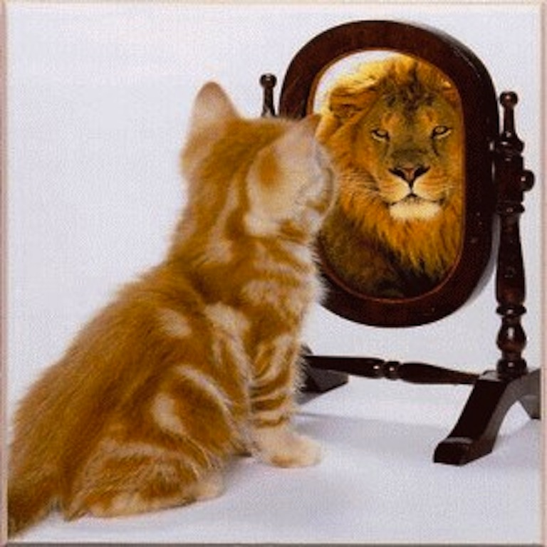 http://www.paulcheksblog.com/wp-content/uploads/2011/06/cat-sees-lion-mirror.jpg