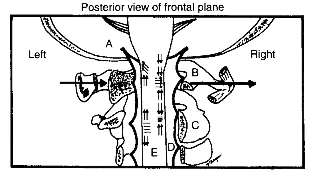 chek totem pole part 6  the upper cervical spine  u00bb paul