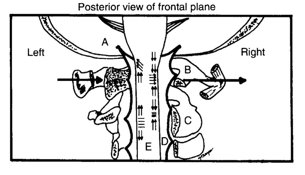 Chek Totem Pole Part 6 The Upper Cervical Spine Paul Cheks Blog