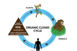 ORGANIC CYCLE