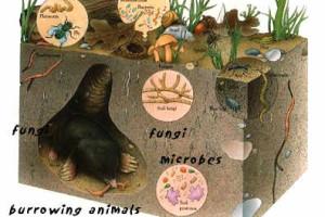 Soil Web of Life