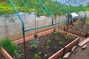 Penny Home garden 1