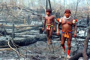 Rainforest natives